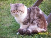 Katzenpäärchen suchen liebevolles