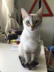 Katzensitter/in gesucht