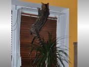 Kippfensterschutz, Fensterschutzgitter, Katzenschutzgitter -