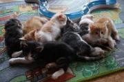 Kitten, kleine Katzenbabys,