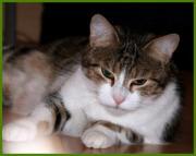 Kitty, 8 Jahre -