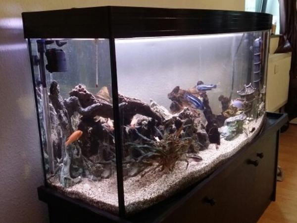 komplett panorama aquarium mit zubeh r in m lheim an der ruhr fische aquaristik kaufen und. Black Bedroom Furniture Sets. Home Design Ideas