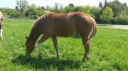 Paint Horse 2