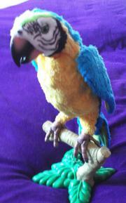 Papagei Coco von