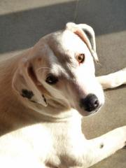 Pete-Traumhund sucht