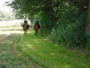 Pferdebox in Tiefenthal,