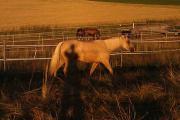Pferdebox mit Trockenpaddock