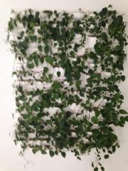 Pflanzwand ( begrünte Wand )