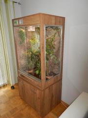 Regenwald Terrarium für