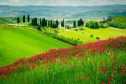 Reise Toskana Kamelienblüte -