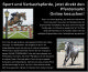 Pferde - Reitsport Keck Pferdemarkt und Online