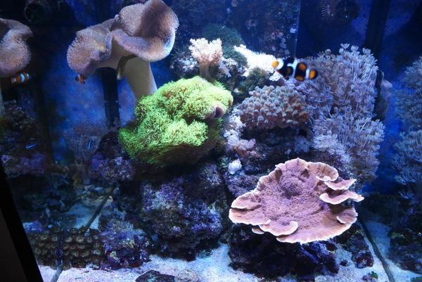 Aquarium fische zubeh r kaufen bei deine for Salzwasser aquarium fische