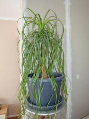Schöne Zimmerpflanze