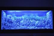 Seewasser Aquarium 540