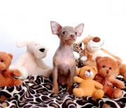 Sehr kleine Hunde *