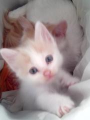 seltene Katzenbabys im