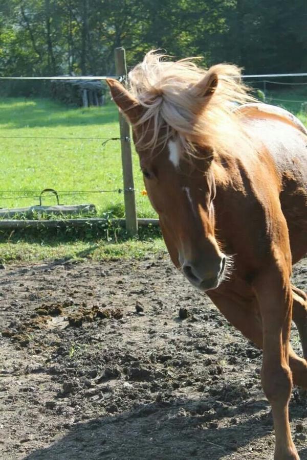 Pferd Reiten Lernen Spielerisch Reiten Lernen »