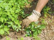 Suche Gartenarbeit.