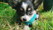 SUCHE - liebevolle Hundebetreuung