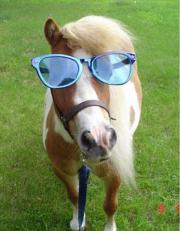 Suche Pony/Kleinpferd