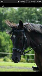 Suche Pony/Pferd