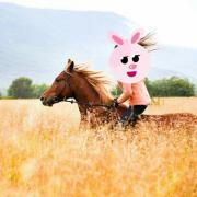 suchen pferd zum