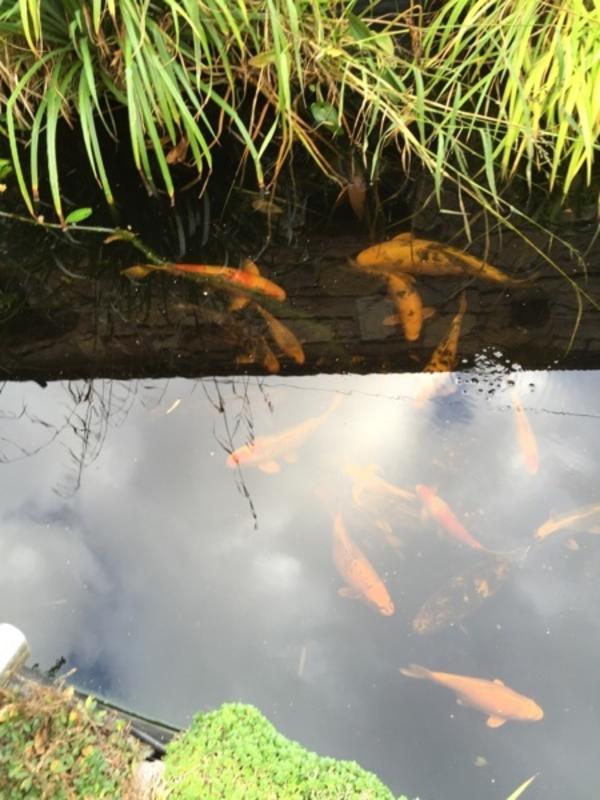 Pumpe teich kleinanzeigen tiermarkt deine for Fische teich ohne pumpe