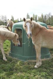 Verkaufe verschiedene Pferde