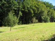 Wiese Grundstück Baumwiese