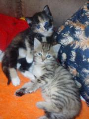 Zwei Katzenmädchen suchen
