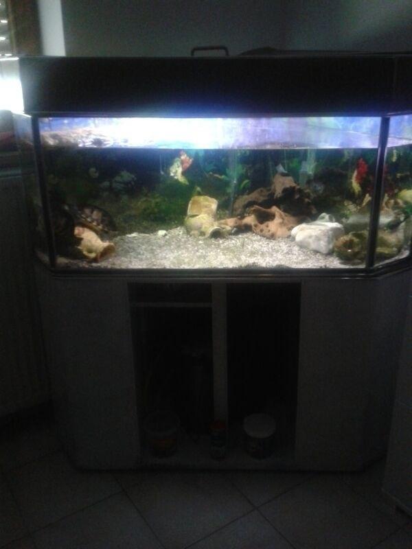 zwei s e wasserschildkr ten mit aquarium in neumarkt fische aquaristik kaufen und verkaufen. Black Bedroom Furniture Sets. Home Design Ideas