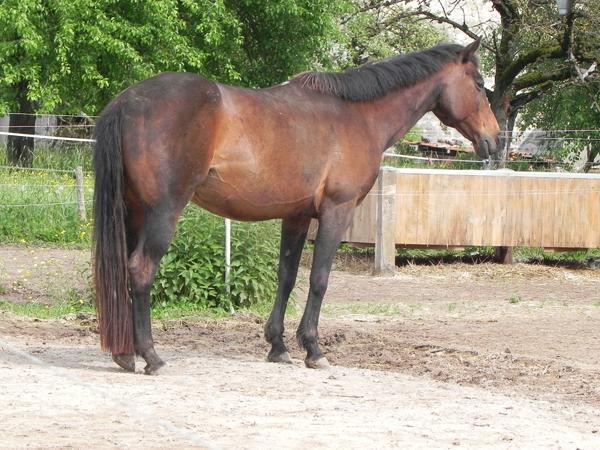 20-jährige Beistellerin » Pferde