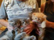 3 kleine teddy