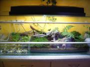 Aqua Terrarium 120cm