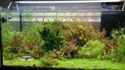 Aquarienpflanzen für Nano