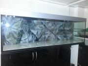 Aquarium 200x60x60