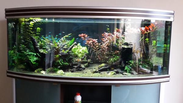 aquarium gebogen kleinanzeigen kaufen verkaufen bei deinetierwelt. Black Bedroom Furniture Sets. Home Design Ideas