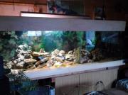 Aquarium Maßanfertigung 1000l