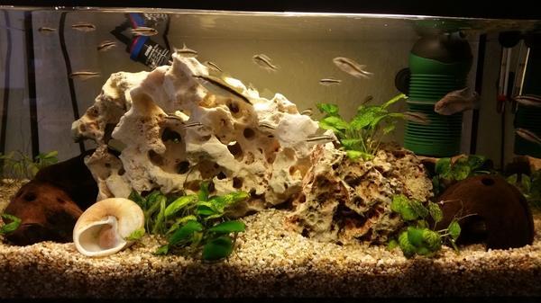 aquaristik in leinfelden echterdingen kaufen bei deinetierwelt. Black Bedroom Furniture Sets. Home Design Ideas