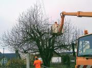 Baum- und Strauchschnitt,