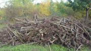 Brennholz, Rebknorzen