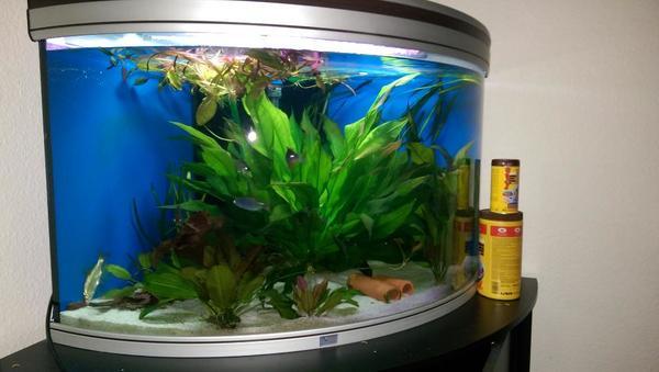 Eck Aquarium kaufen  Eck Aquarium gebraucht  dhd24com