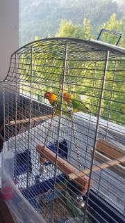 ein paar vogel