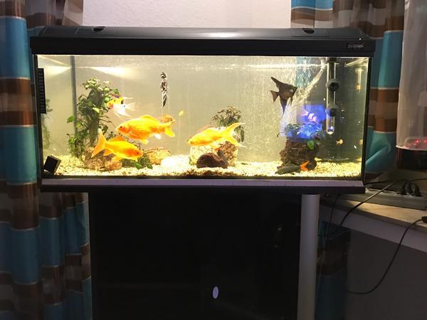 Was was fische gebraucht kaufen nur 3 st bis 75 g nstiger for Aquarium gebraucht