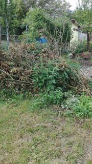 Garten-Job grünschnitt