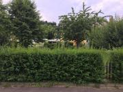 Garten-/ Obstbaumwiese zur
