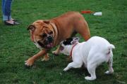Gelände für Hundetagesstätte