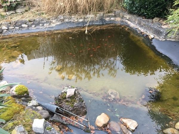 Aquaristik in r desheim kreis bad kreuznach kaufen bei for Goldfische gartenteich