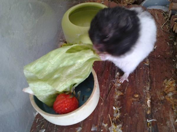 Hamster Pflegestelle und » Kleintiere