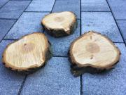 Holzscheiben aus Zypressen